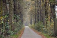 2011-1106-009Allee