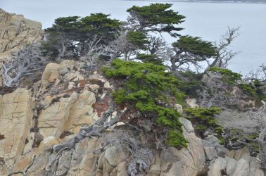 USA-PointLobos-WaldDSC 5217