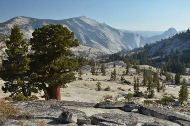 2012-Cal-Yosemite-Olmstedt-ueberblick