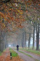 2011-1106-073Allee-