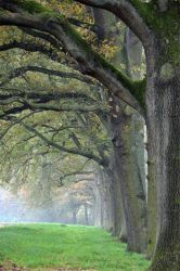 2011-1106-046Allee